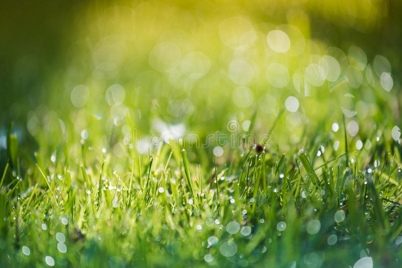 Grass and water in small depht of field intentionally. Blur stock photography