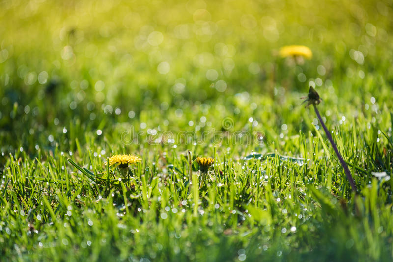Grass and water in small depht of field intentionally royalty free stock image
