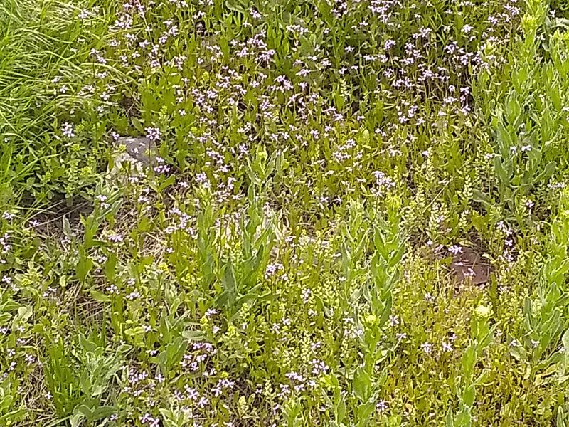 Grass weeds cover stock photo