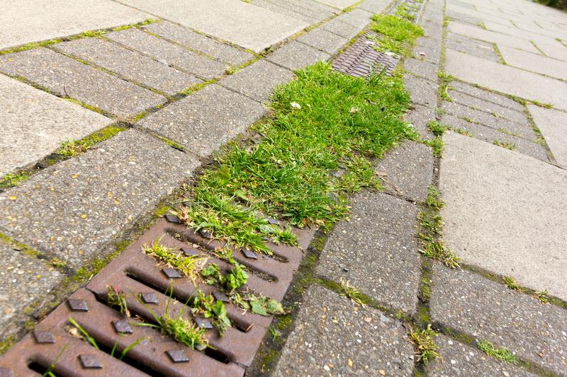 Grass and weeds growing in a road gutter. Grass and weeds growing from a gutter situated on a walkway/pavement stock images