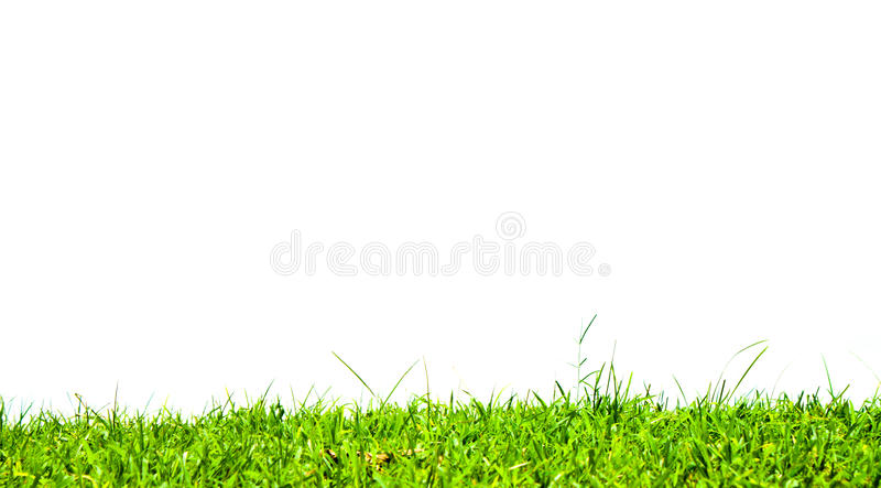 Download Grass on white background. stock photo. Image of macro - 26389672