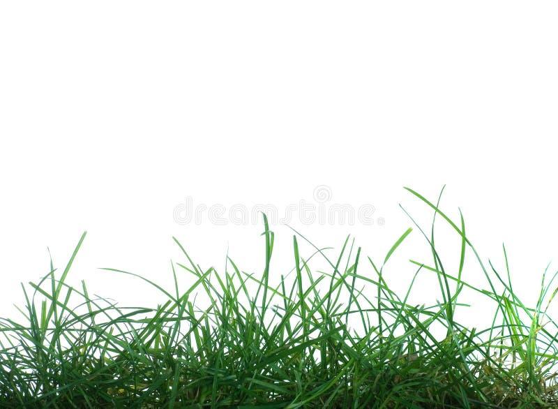 Grass On White Background Royalty Free Stock Photo