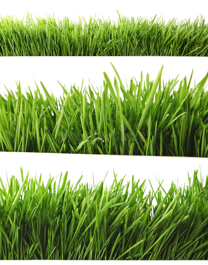 Download Grass on white stock image. Image of lawn, spring, background - 39503645