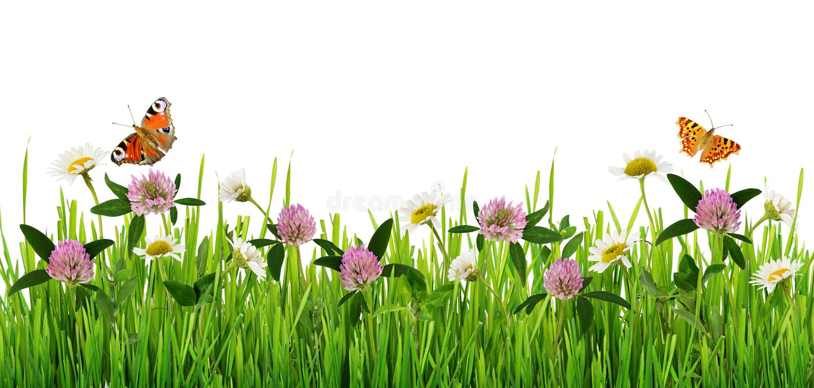 Grass and wild flowers border with butterflies royalty free stock images
