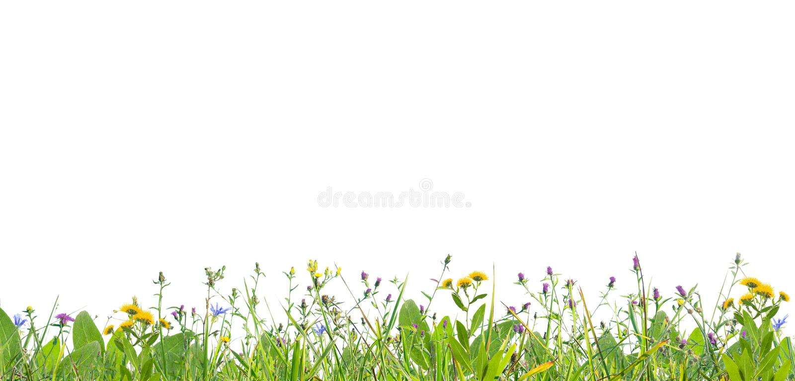 Grass and wild flowers stock images