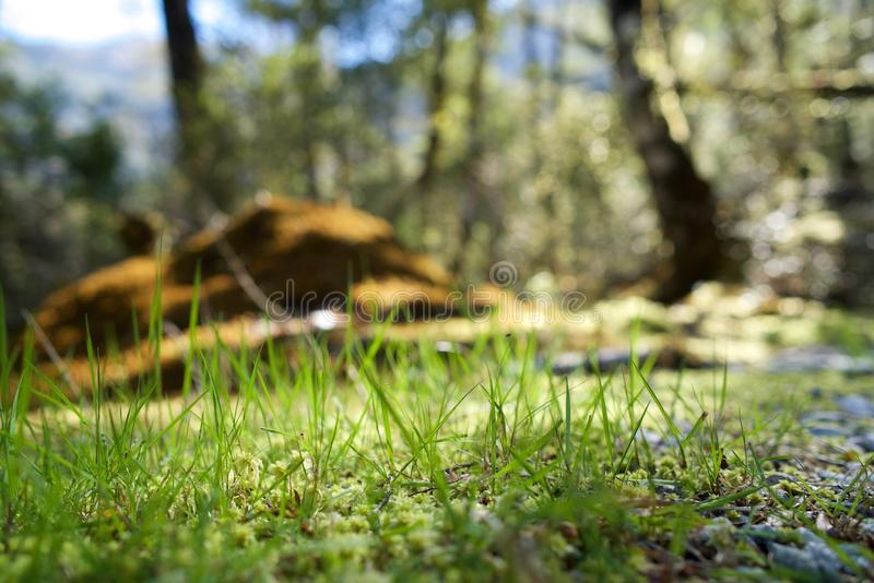 Grass, Wildlife, Ecosystem, Nature Reserve royalty free stock photography