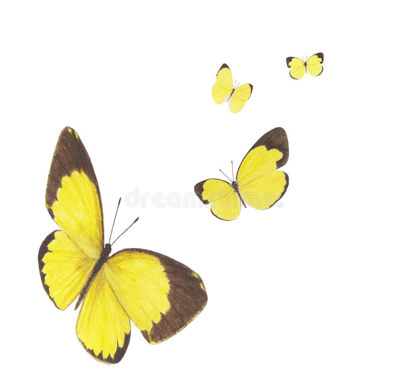 Grass yellow stock image