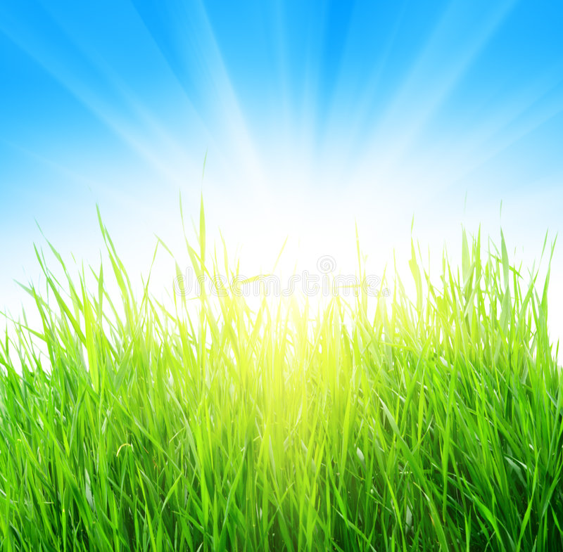 Grass and yellow sun royalty free stock photo