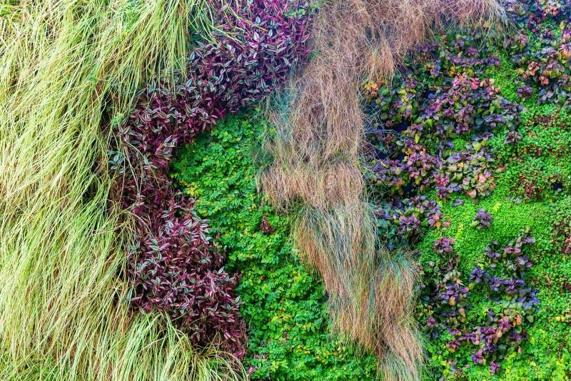Grassen en andere installaties bij een verticale muur stock foto