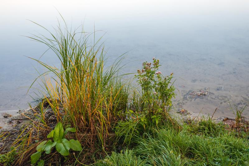 Grassen en kruiden op de waterkant stock foto