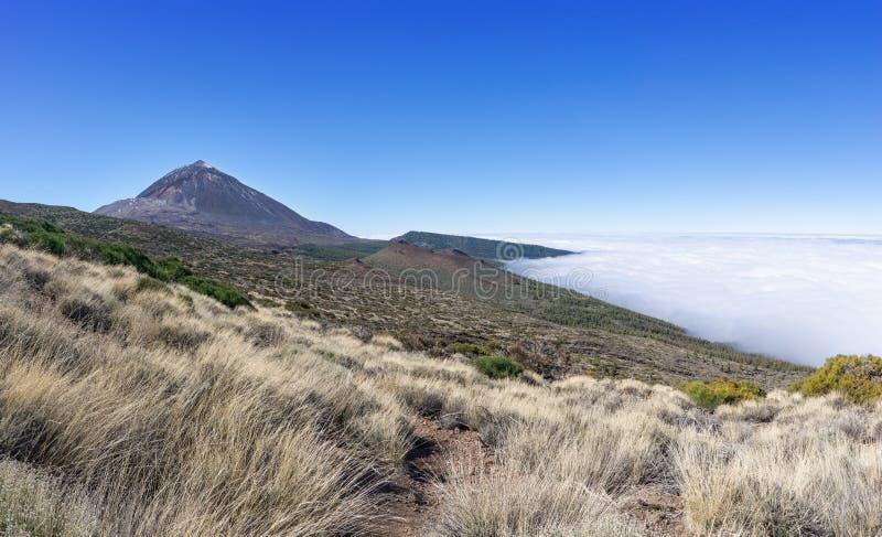 Grassen in het nationale park Tenerife met vulkaan Teide royalty-vrije stock fotografie