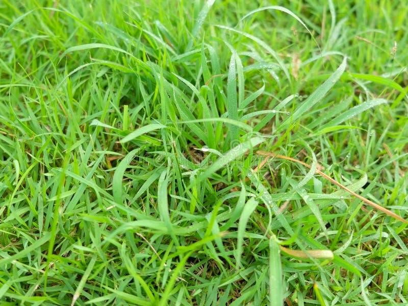 Grassen in het park royalty-vrije stock foto's
