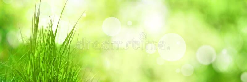 Grassen met groene bokehachtergrond stock foto's