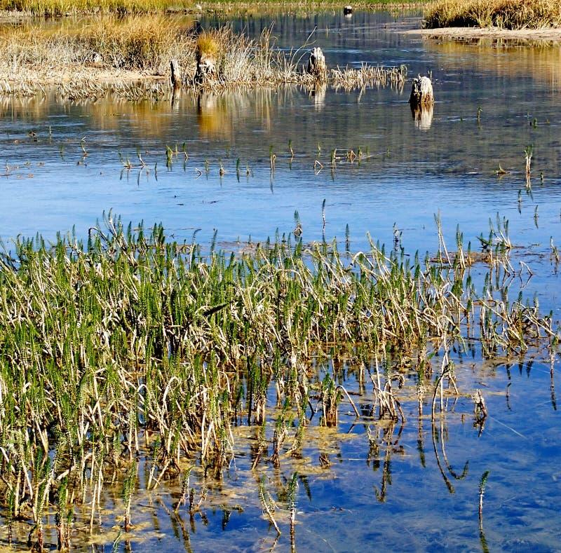 Grassen in Paulina Lake stock afbeelding