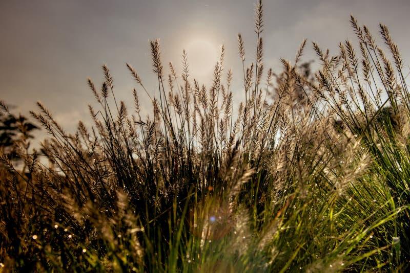 Grassengebied op de zonsopgang stock foto