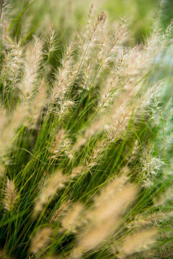 Grassengebied op de zonsopgang royalty-vrije stock fotografie