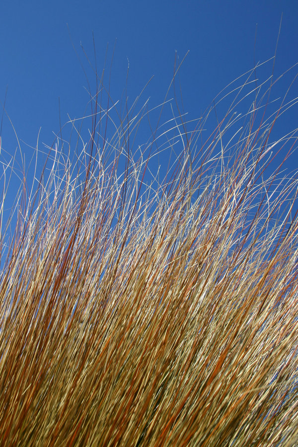 Download Grasses stock image. Image of blue, breeze, grass, trees - 119907