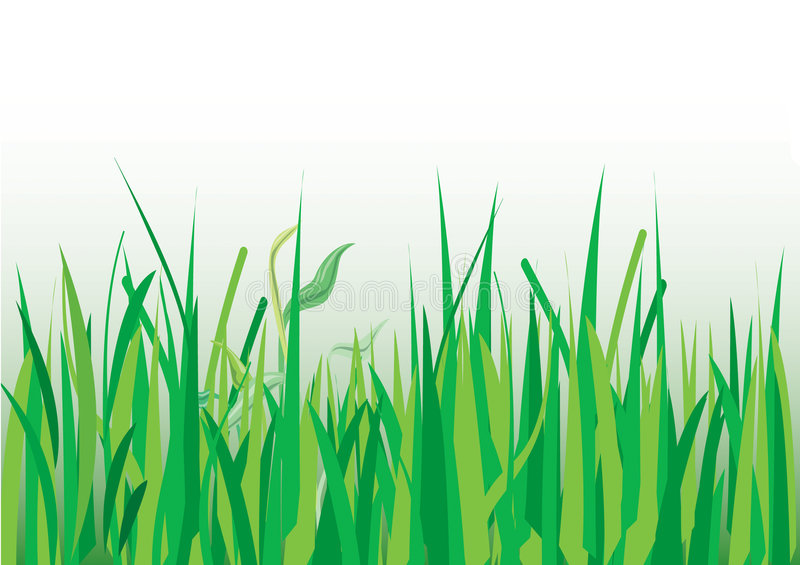 Download Grasses stock image. Image of cane, petal, green, grass - 2407151