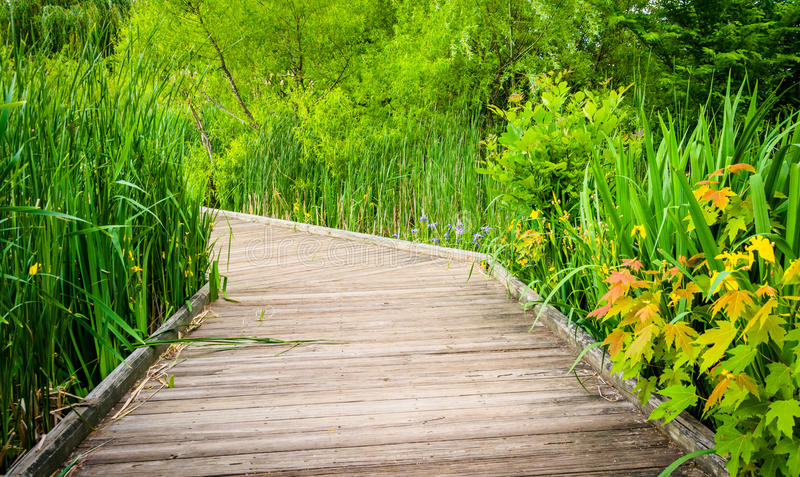 Grasses along a boardwalk trail at Patterson Park, Baltimore, Ma stock photography