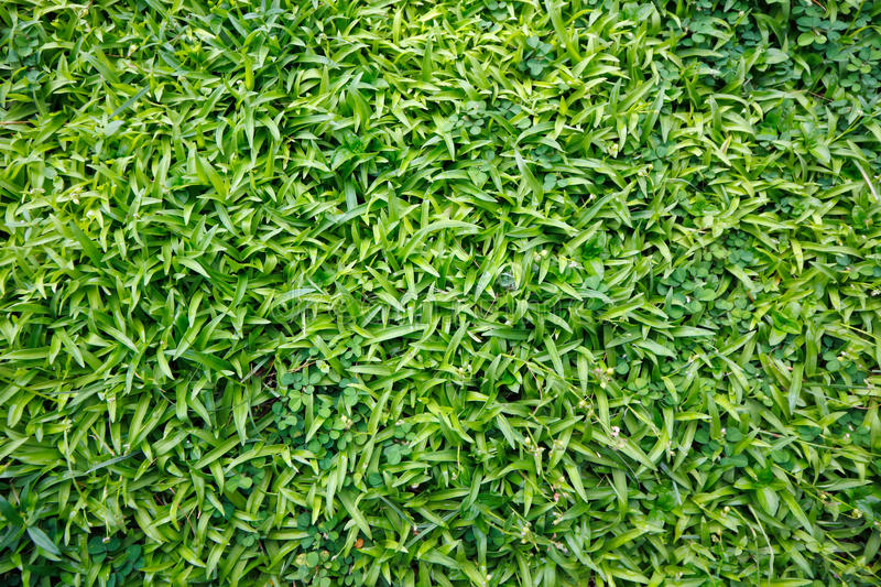 Grasses background. Top view green grasses background royalty free stock photography