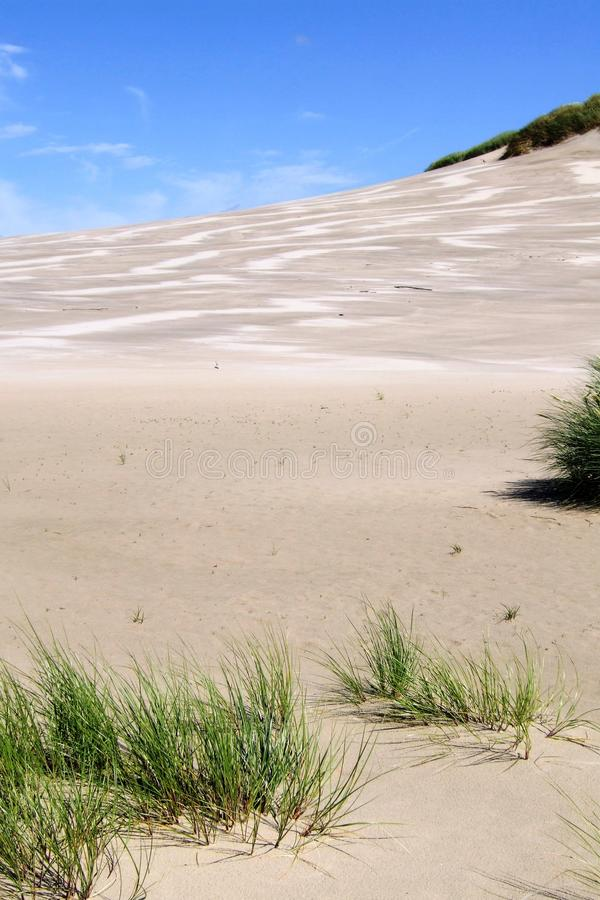 Download Grasses in the dunes stock photo. Image of include, polish - 22552942