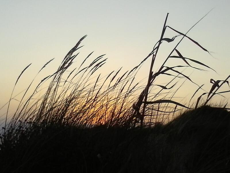 Grasses In Field At Sunset Free Public Domain Cc0 Image