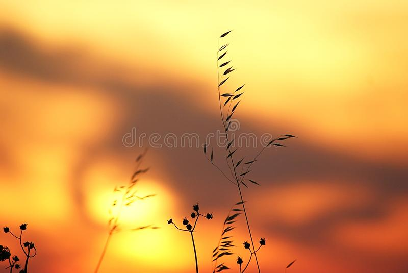 Grasses in front of colorful sky royalty free stock image