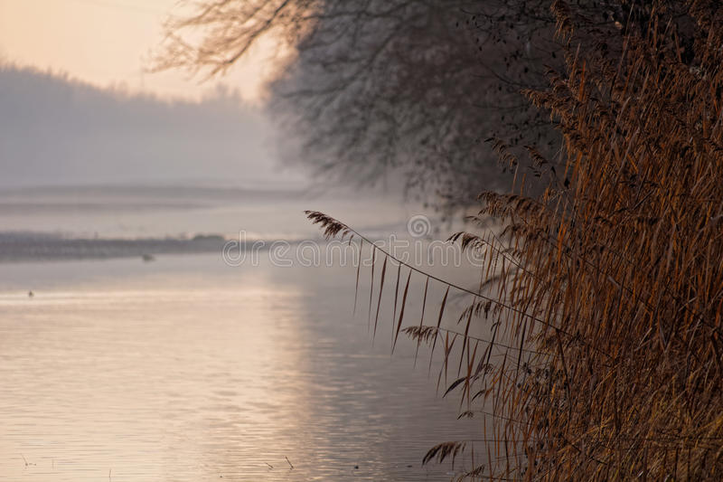 Grasses at river landscape misty morning at fall stock images