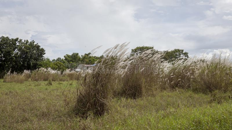 Grasses in rural field royalty free stock photography