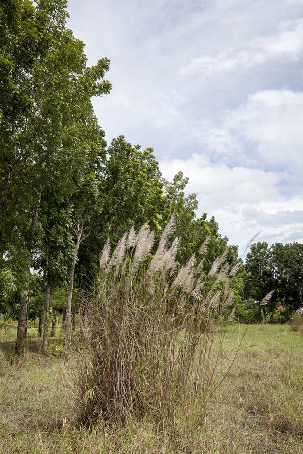 Grasses in rural field stock image