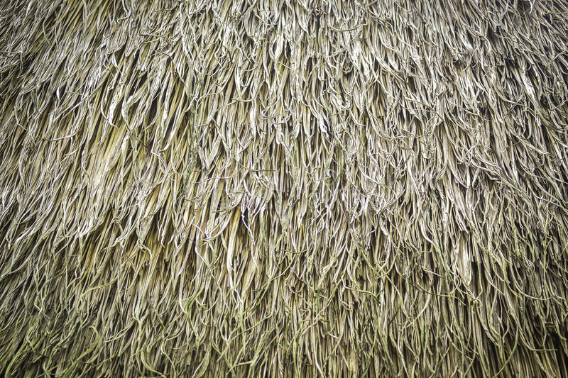 Grasses thatch roof. Texture and pattern of grasses thatch roof royalty free stock images