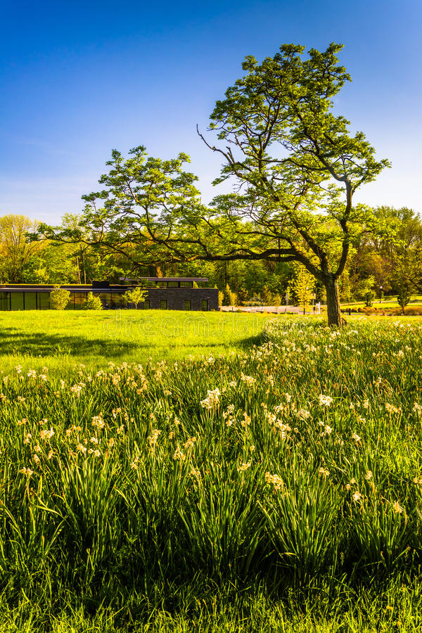 Grasses and a tree at Cylburn Arboretum in Baltimore, Maryland. stock photography