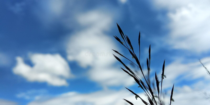 Grassflowers foto de archivo libre de regalías