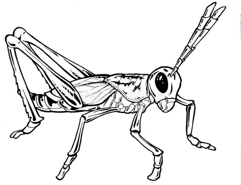 grasshopeer чертежа бесплатная иллюстрация