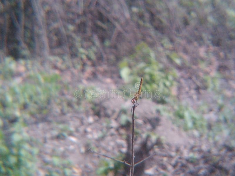 Grasshoper in wildernis stock afbeeldingen