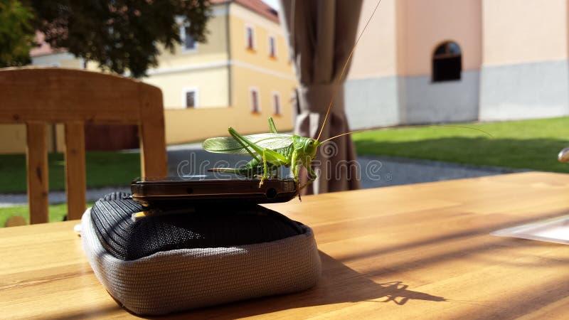 Grasshoppe imagem de stock