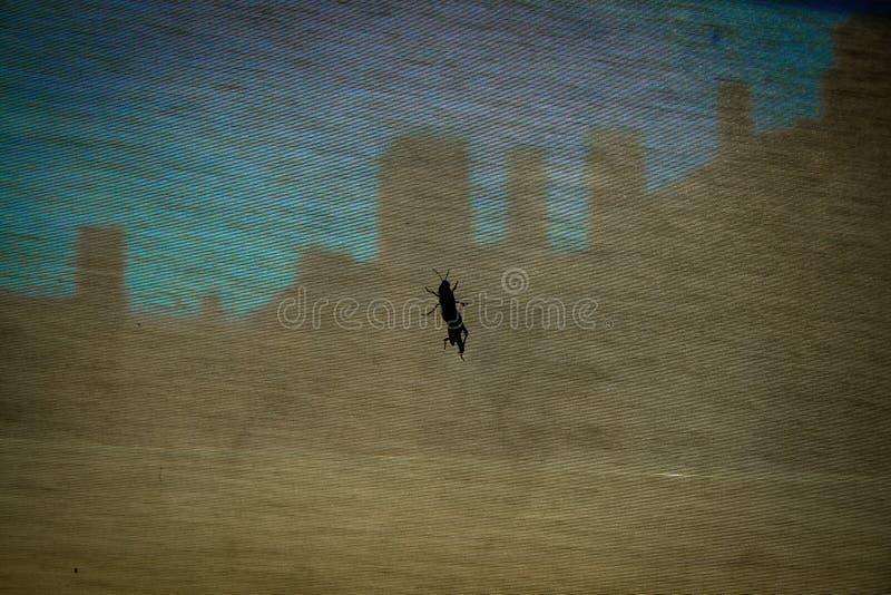 Grasshopper που στηρίζεται μέσα σε ένα σπίτι στοκ εικόνες