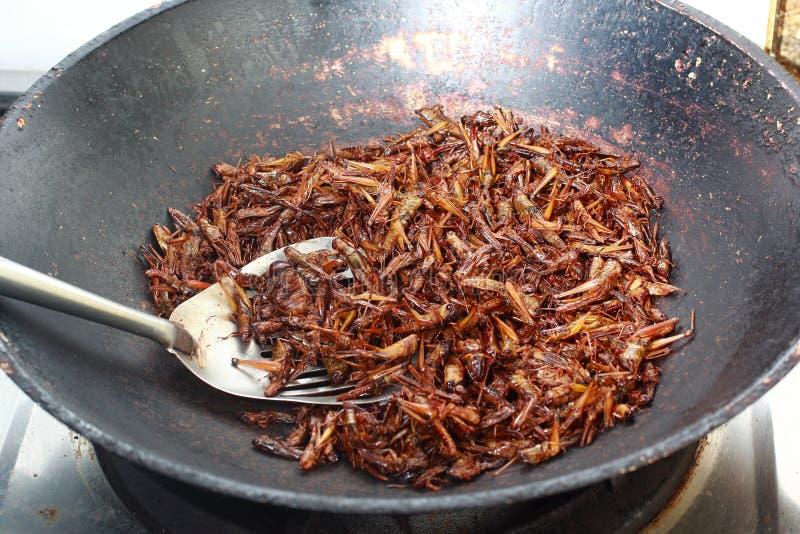 Grasshopper που τηγανίζεται στοκ εικόνα με δικαίωμα ελεύθερης χρήσης