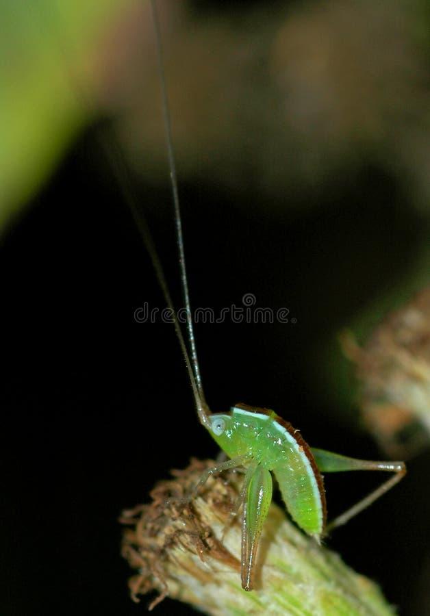 grasshopper τόξων μωρών παίρνει στοκ εικόνα