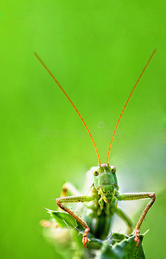 Download Grasshopper stock image. Image of sitting, closeup, small - 12065135