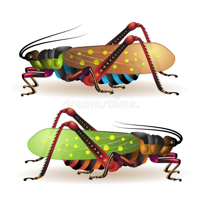 Grasshopper. Isolated on a white background royalty free illustration