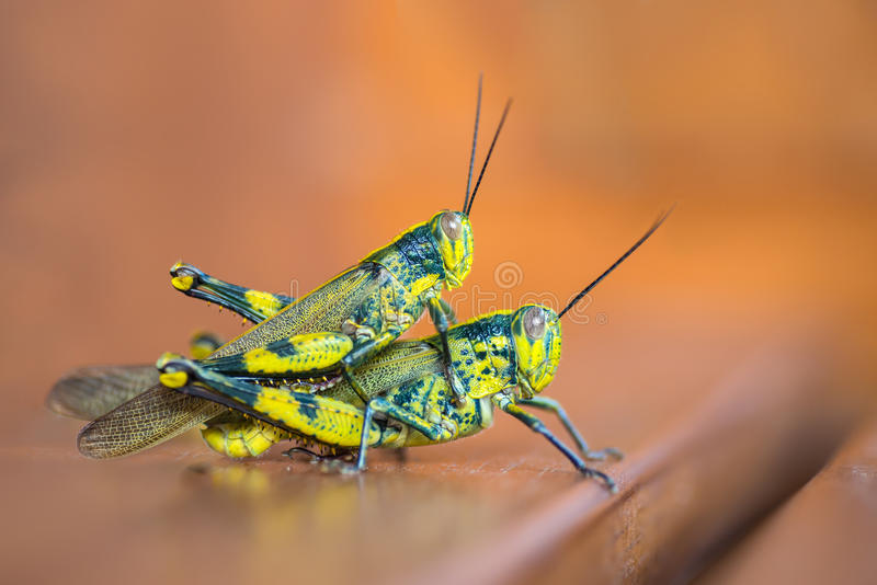 Download Grasshopper stock image. Image of outdoor, antenna, closeup - 26826543