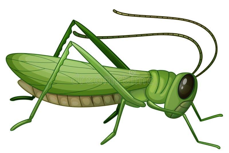 Grasshopper διανυσματική απεικόνιση