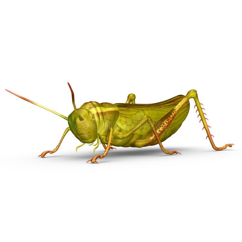grasshopper royalty illustrazione gratis