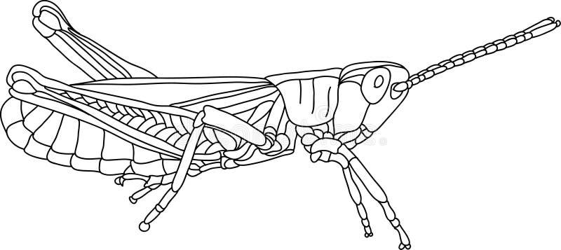 Grasshopper. Vector - grasshopper isolated on background vector illustration