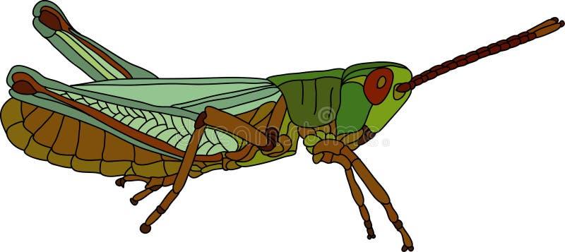Grasshopper. Vector - grasshopper isolated on background stock illustration