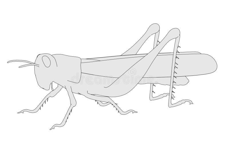 Grasshopper. 2d cartoon illustration of grasshopper vector illustration