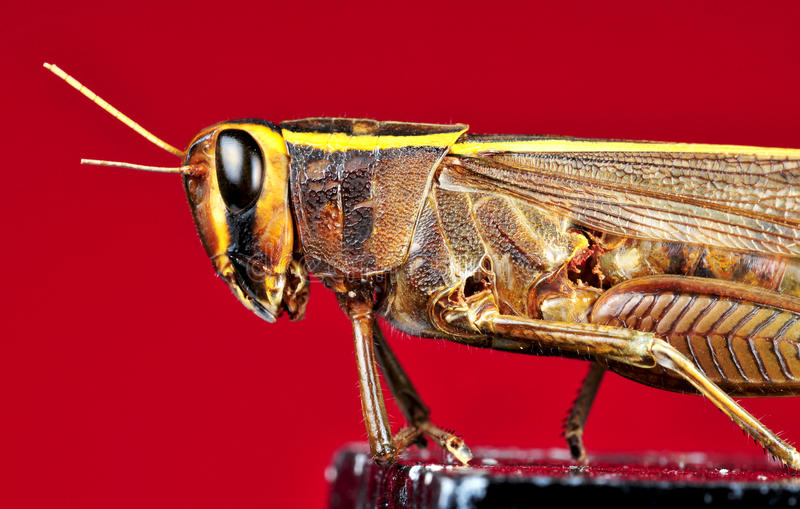 Grasshopper detail