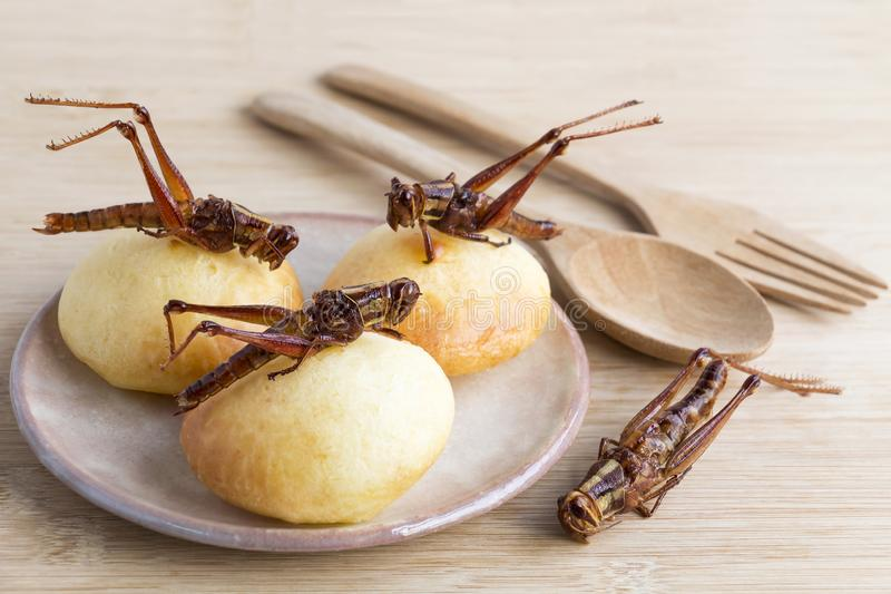 Grasshopper is edible insect for eating as food Insects deep-fried crispy snack and bakery baked on plate with wooden spoon on royalty free stock photos