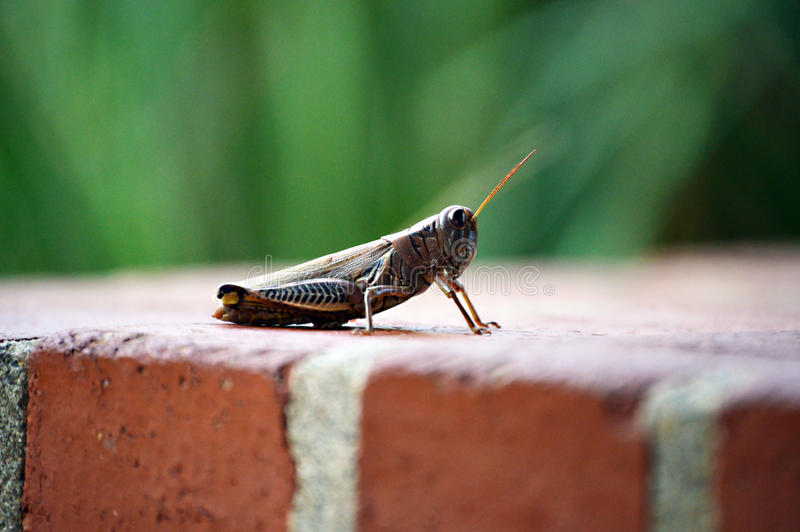 Grasshopper Friend royalty free stock images